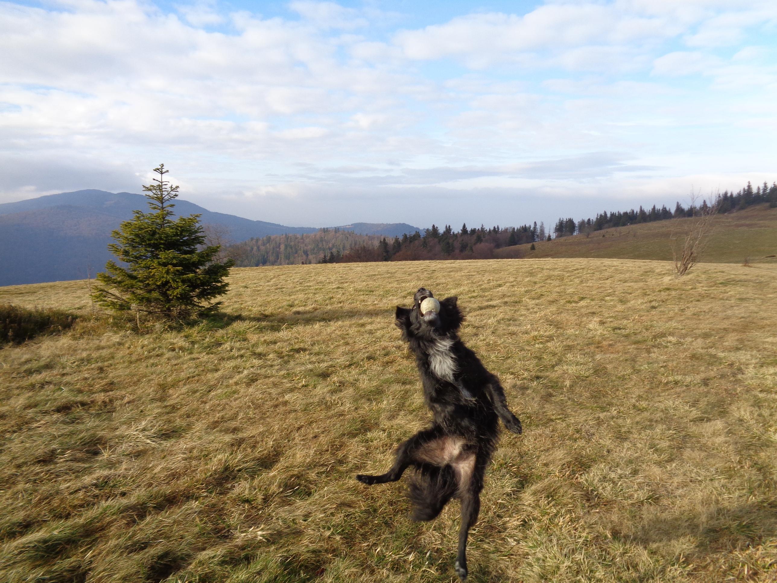 Gorc z psem – niebieski szlak z Rzek.